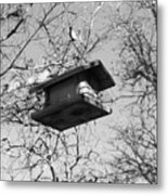 Bird Feeder From A String Metal Print