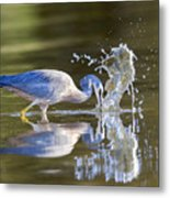 Bird Fishing In Lake Metal Print