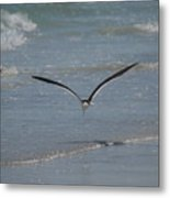 Bird Flying In The Surf 2 Metal Print
