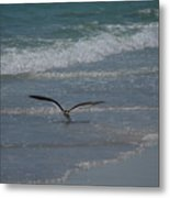 Bird Flying In The Surf Metal Print