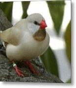 Bird Gazing Metal Print