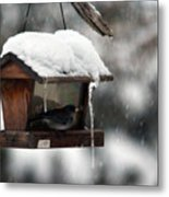 Bird House Blues Metal Print