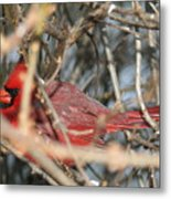Bird In A Bush Metal Print