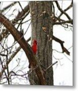 Bird In A Tree Metal Print