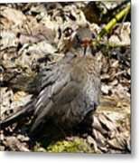 Bird In Hiding Metal Print