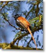 Bird In High Ground Metal Print
