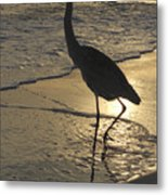 Bird In Paradise Metal Print