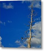 Bird In Tree Metal Print