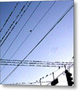Bird Invasion Metal Print