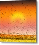 Bird Land Fine Art Color Photography Print Metal Print