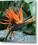 Bird Of Paradise 1 Metal Print