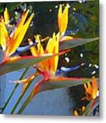 Bird Of Paradise Backlit By Sun Metal Print by Amy Vangsgard