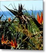 Bird Of Paradise By The Sea Metal Print