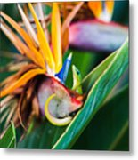 Bird Of Paradise Gecko Metal Print