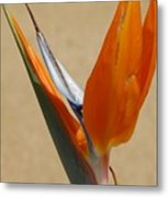 Bird Of Paradise II Metal Print