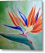 Bird Of Paradise, Noon Metal Print
