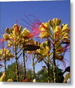 Bird Of Paradise Shrub Metal Print