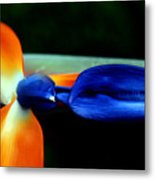 Bird Of Paradise Study 1 Metal Print