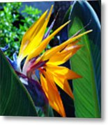 Bird Of Paradise Metal Print by Susanne Van Hulst
