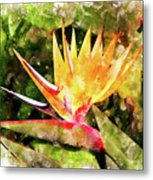 Bird Of Paradise Wc Metal Print