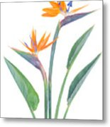 Bird Of Paradize Flowers Metal Print