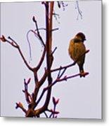 Bird On A Bud Metal Print