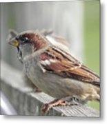 Bird On A Fence Metal Print
