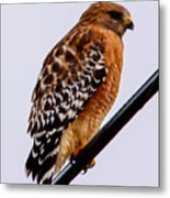 Bird On A Wire With Attitude Metal Print