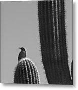 Bird On Cactus Metal Print