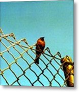 Bird On Fence Metal Print