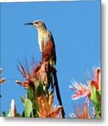 Bird On Protea Metal Print