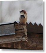 Bird On Roof Metal Print