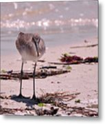 Bird On The Beach Metal Print