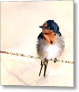Bird On Wire Metal Print