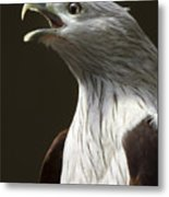 Bird Portrait Metal Print