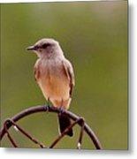Bird Solitude Hbn1 Metal Print