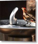 Bird Spa Metal Print by Christine Till