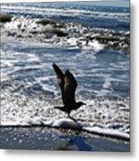 Bird Taking Flight On The Shore Metal Print