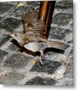 Bird Taking Flight Metal Print