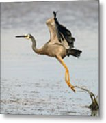Bird Taking Off Metal Print