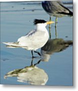 Bird - Tern - Reflection Metal Print