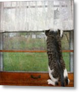 Bird Watching Kitty Cat Metal Print