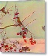 Bird Waxwing Metal Print