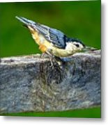 Bird With The Seed Metal Print