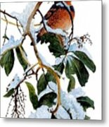 Birds 05 Varied Thrush On Arbutus Robert Bateman Sqs Robert Bateman Metal Print