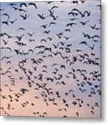 Birds A Flock Of Seagulls Metal Print