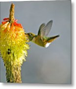 Birds And Bees Metal Print
