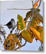 Birds And  Berries Metal Print