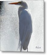 Birds And Fun At Butler Park Austin - Birds 2 Macro Metal Print by Felipe Adan Lerma