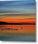 Birds At Dawn By The Buoy  Metal Print